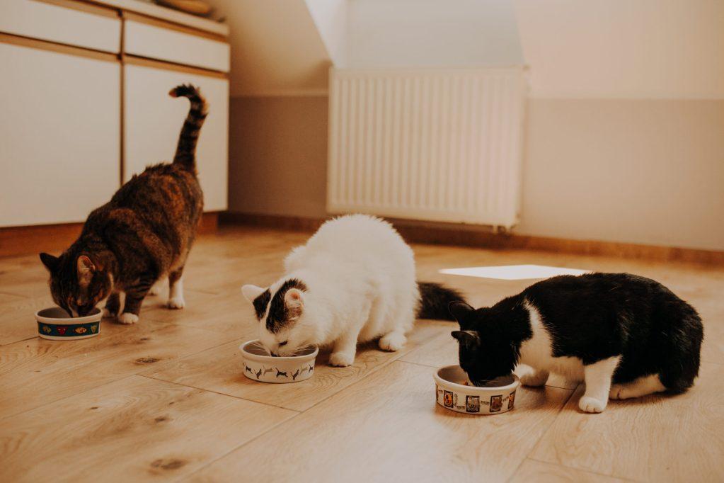Akcja charytatywna dla zwierząt ''Reks''