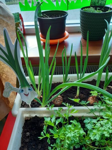 Nasz zielony ogródek